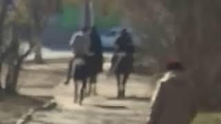 Наездники на лошадях были замечены в городе