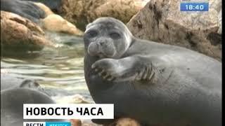 Добывать нерпу на Байкале разрешил Минсельхоз России