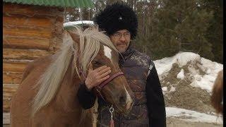 В Назымском хуторе станицы Ермаковской  воспитывают лошадей для казаков