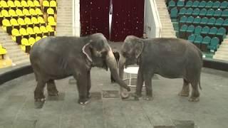 Новая программа в рязанском цирке