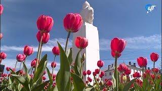 В Великом Новгороде начали расцветать клумбы