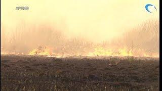 МЧС вводит в Новгородской области чрезвычайный класс пожароопасности