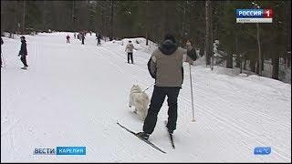 В Петрозаводске закрыли лыжный сезон