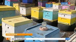 Пасечники прогнозируют повышение цен на мёд в Новосибирской области
