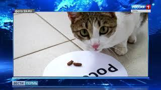 Кошка Василиса предсказала исход матча Россия-Египет
