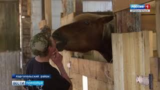 «Мезенки» Кенозерья примут участие в Международной конной выставке