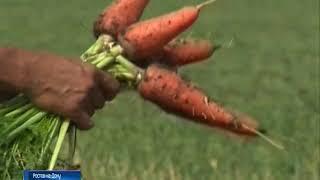 Урожай тепличных овощей до 8 раз в год: ученые ДГТУ собрали уникальную установку