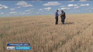 В башкирском Зауралье повторяется засуха 2010 года