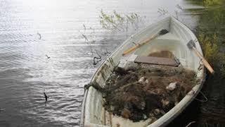 На Рыбинском море прошел экологический субботник