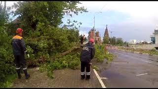 Сильный ветер повалил несколько деревьев в Ярославле