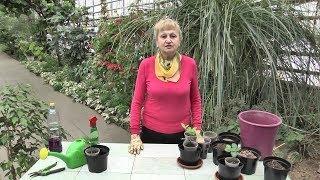 Секреты правильной пересадки растений от специалиста