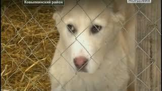 Сергей Антонов из Ковылкинского района занимается разведением элитных пород собак