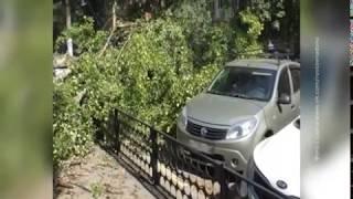 Ветер, ветер, ты могуч: в Ростове из-за разгула стихии падают деревья и обрываются провода