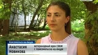 Бешенство в Комсомольске