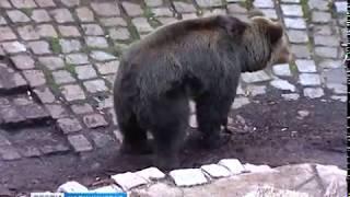 В калининградском зоопарке открылся вольер под названием «Дом старых медведей»