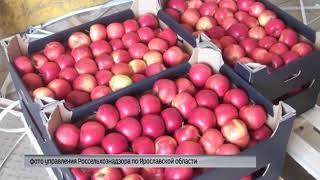 Более двух тонн санкционных продуктов выявлено в Ярославской области