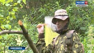 Ученые рассказали, долго ли гнус будет атаковать новосибирцев