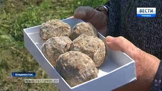 Особые микроорганизмы будут решать экологическую проблему озера в районе бухты Патрокл