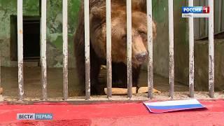 Работники зоопарка: «Медведица Маша оказалась патриоткой»