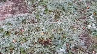 Обещают заморозки | Новости сегодня | Происшествия | Масс Медиа