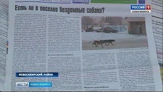 В Краснообске проведут дополнительный отлов бездомных собак