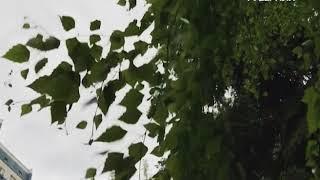 Дожди с грозами накроют Самарскую область на несколько дней