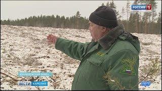 Вместе с правом на заготовку древесины  обязанность на восстановительные работы