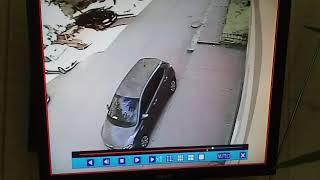 В Ростове рухнуло дерево 21.06.18