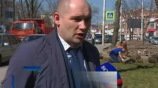 В Ростове высадят 6 тысяч молодых деревьев и 8 тысяч кустарников