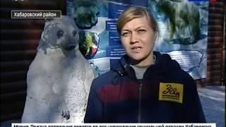 Зоосад Приамурский. Программа сохранения белых медведей