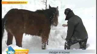 ДТП с фурой, которая везла табун лошадей, возле Шелехова: животным требуется помощь