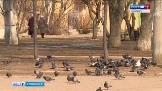 Жители областного центра обсуждают гибель голубей в центре Смоленска