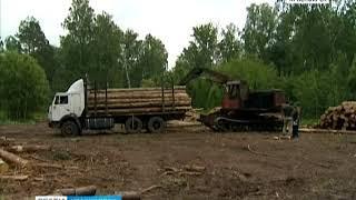 Незаконную вырубку леса в Березовском районе остановили