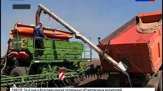 Хозяйства южных районов Амурской области начали сев сои