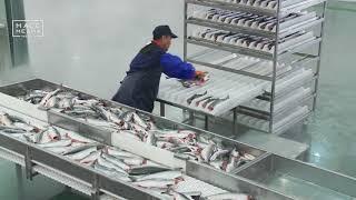 Рыбзавод построят на Камчатке | Новости сегодня | Происшествия | Масс Медиа