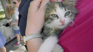 В Волгограде обитатели приюта «Дино» испытали щенячий восторг от встречи с новыми хозяевами