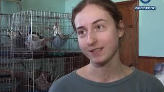 В Пензе 3 марта отметят День котика