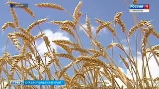 Ставропольские аграрии намолотили 8 миллионов тонн зерна
