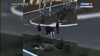 На территорию одной из костромских гостиниц зашел лось