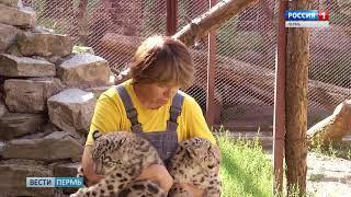 Премьера в зоопарке: Снежные барсята вышли на прогулку