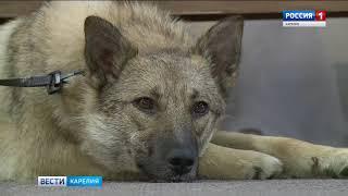 Школа по обучению собак навыкам лечения особенных детей открылась в Петрозаводске