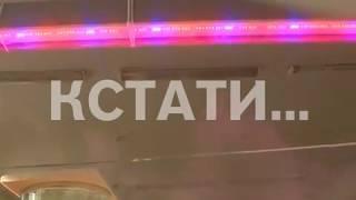 Растения для космоса - новый методы отрабатывают в Нижегородской сельхоз-академии