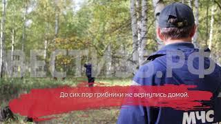 Трое грибников пропали в лесах Междуреченского района