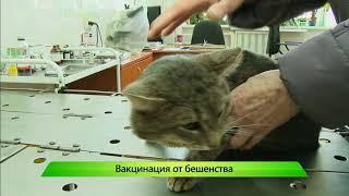 ИКГ Вакцинация кошек и собак #3