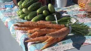 В конце августа стартует традиционный месячник по реализации сельхозпродукции.
