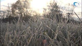 Новгородскую область ожидают заморозки