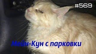 ☭★Подборка Аварий и ДТП/от 02.03.2018,Russia Car Crash Compilation/#569/March2018/#дтп#авария