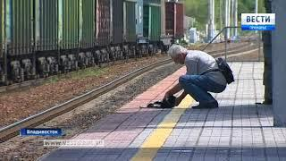 Свой Хатико появился у владивостокцев: кого ждет кот на станции Океанской
