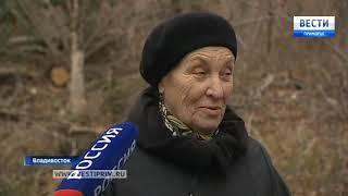 В пригороде Владивостока черные лесорубы уничтожат самые крупные хвойные деревья Дальнего Востока