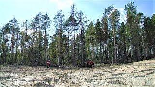 Природнадзор Югры начал проверку рекультивированных земель